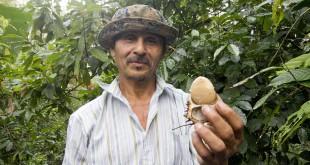 fair trade photos about MCCH ecuador by fair trade connection tagua