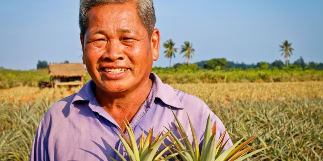 Samroiyod Fair Trade Pineapple Growers, Thailand