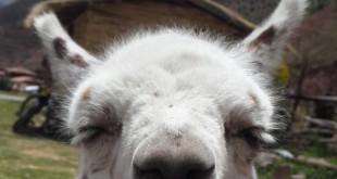 fair trade photos of ALLPA alpaca weavers Peru by fair trade connection
