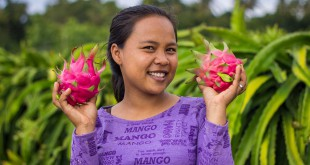our best fair trade photos about PMA-dragon-fruit-farmers indonesia