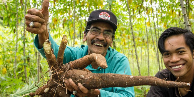cassava-farmers our best photos of the fair trade PMA indonesia
